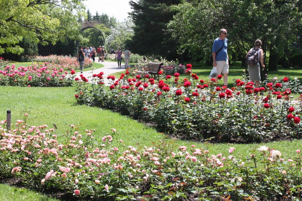 Róże w miastach